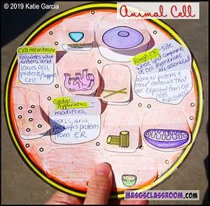 Free Video  Notes   U0026 Venn Diagram For Plant  U0026 Animal Cells