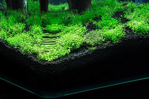 Aquascaping Forum - was ist mit meinem hcc los wasserpflanzen allgemein