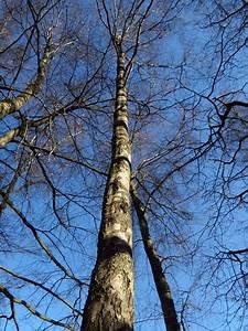 Holz Schnell Trocknen : birkenholz spalten aber bitte z gig brennholz ~ Frokenaadalensverden.com Haus und Dekorationen