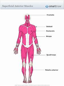 17 Best Images About Musculoskeletal On Pinterest