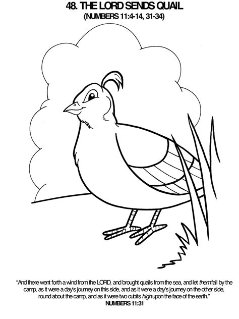 Quail Coloring Page Lord Sends A Quail Coloring Page Bible Class