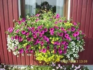 Blumenkästen Bepflanzen Ideen : balkonkasten blumenk sten balkon terasse pinterest balkonk sten balkon deko und ~ Eleganceandgraceweddings.com Haus und Dekorationen