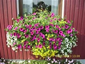 Balkonkästen Bepflanzen Beispiele : balkonk sten synchron bepflanzen haus garten forum ~ Lizthompson.info Haus und Dekorationen