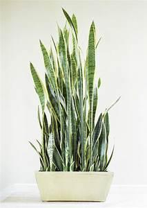 Best, Indoor, Plants