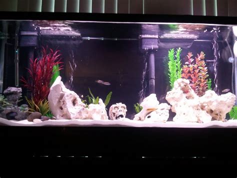55 gallon fish tank in litres fish tank pauls 55 gallon 200 litre fresh water tropical