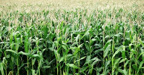 corn production costs   northern great plains