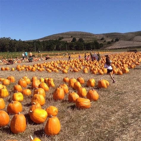 Half Moon Bay Pumpkin Patches pinterest discover and save creative ideas
