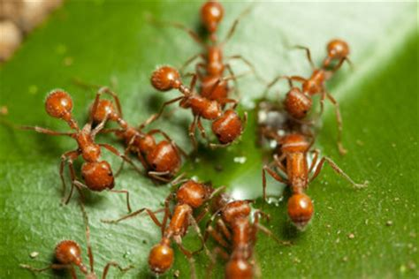 Kleine Rote Ameisen Im Garten 4271 by Rote Waldameise Aus Dem Garten Vertreiben So Gelingt S