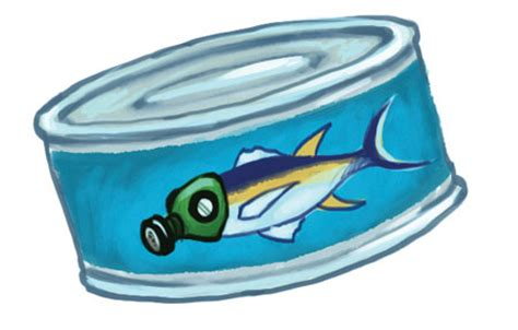 mercury alert  canned tuna safe  eat environmental