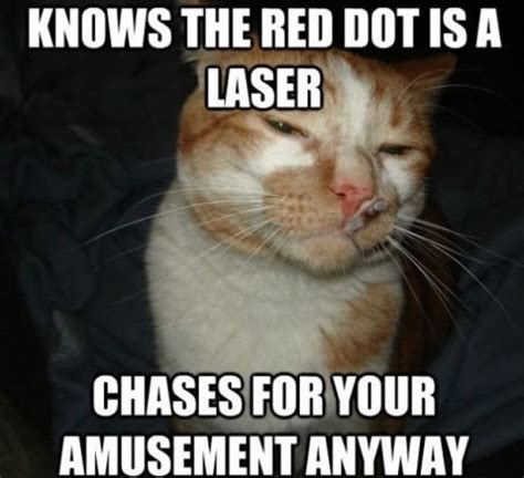 Laser Cat Meme - top 99 ideas about cat vs the red dot on pinterest cats funny cat memes and dots