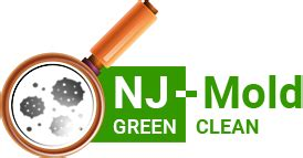 schedule mold testing removal summit nj mold remediation