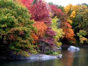 trees wordifull