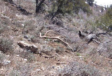 elk shed utah northern utah elk sheds contest winner monstermuleys