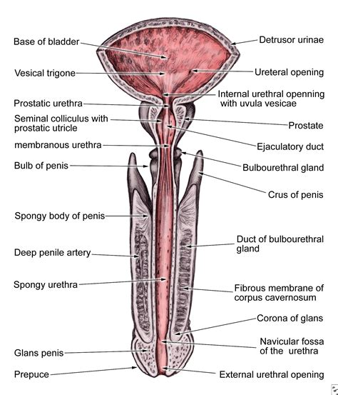 Male Body Organs Diagram, Male, Get Free Image About. Minot Ave Family Medicine Kdp Self Publishing. Storage In Bloomfield Nj Nj Insurance Brokers. Gossip Girl Episode 3 Season 1. Termite Treatment Arizona Dell Remote Support. Best Way To Send Photos By Email. Controls Engineering Courses. University Of Maryland Collage Park. Alcatraz Prisoner List Insurance For Landlord