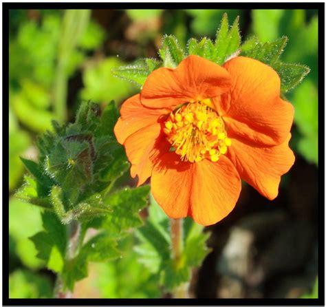 Zimmerpflanze Orange Blüte by Orange Bl 252 Te Foto Bild Pflanzen Pilze Flechten