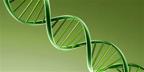 dna structure  discovery structure  functions  dna