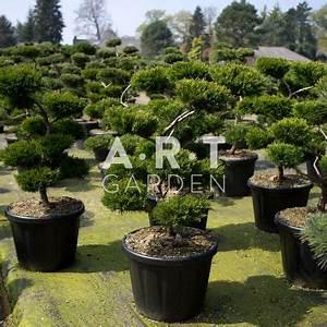 Arbre En Nuage : arbre nuage haut de gamme pour votre jardin zen ~ Melissatoandfro.com Idées de Décoration