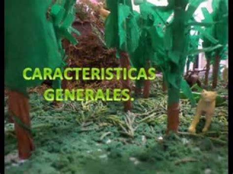 Imagenes de maquetas de bosque tropical Imagui