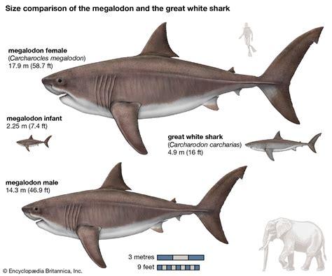 World Biggest Shark Ever Caught