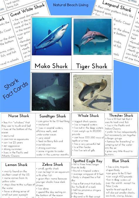 shark activities  kids  shark printables