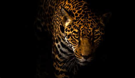 Jaguar Pics by Jaguar