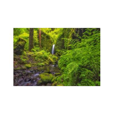 Columbia River Gorge Oregon waterfall river forest fern