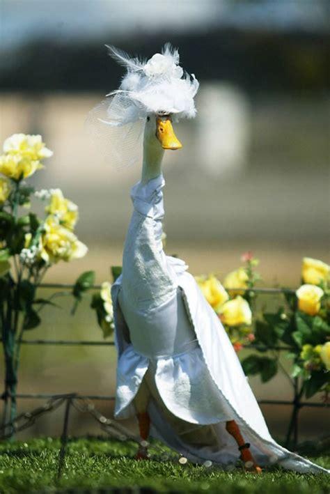 amazing     duck fashion show