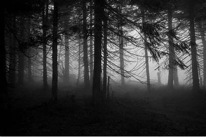 4k Spooky Forest Background Wallpapers Ultra Backgrounds