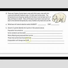 Natural Selection Worksheet Youtube