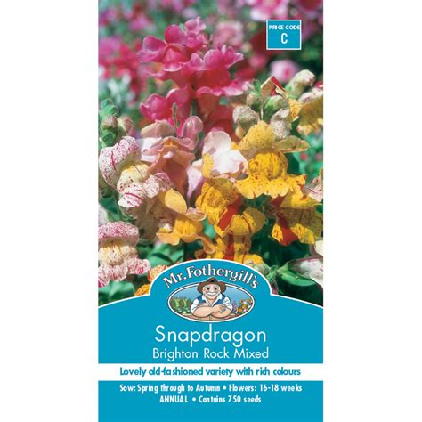 mr fothergill s snapdragon brighton rock flower seed