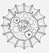 Coloring Amoeba Template sketch template