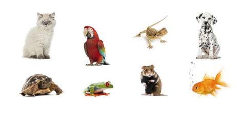 consejos  elegir una mascota animalesmascotas