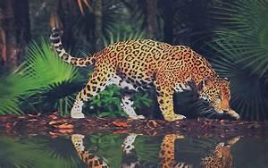 Big cats Jaguars Animals wallpaper   1920x1200   100488 ...