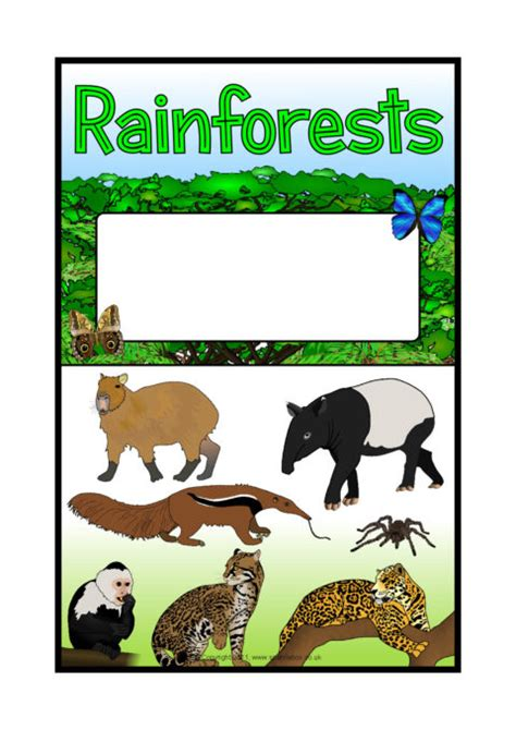 rainforestsamazon rainforest editable topic book covers