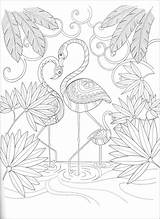Paradise Birds Coloring Calm Keep Expanded Open Dover sketch template