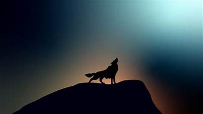 Wolf 4k Howling Wallpapers Resolution 1080p Laptop