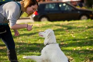 training a deaf dog victoria stilwell positively With deaf dog training