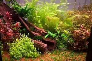 Aquarium Einrichten Anfänger : aquarium einrichten anleitung f r einsteiger ~ Lizthompson.info Haus und Dekorationen