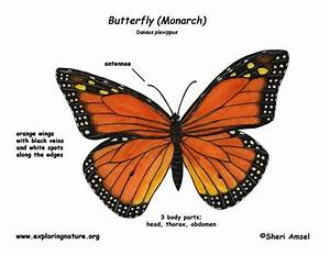 Colorful Milkweed Clipart
