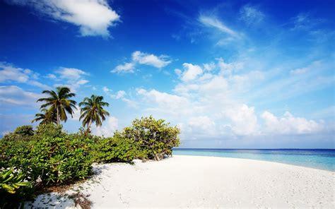 tropical hd fond d 233 cran and arri 232 re plan 2560x1600 id 392509