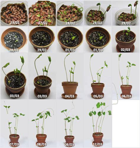 astuces pour faire pousser une plante d 233 veloppement et paix