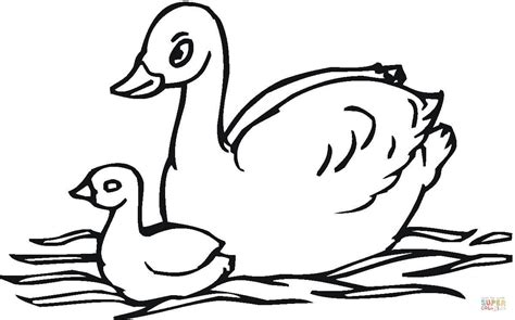 baby swan coloring page free printable coloring pages