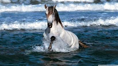 Horse Seven Running Desktop Water Wallpapers