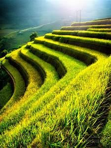 Terraced, Rice, Fields, -, Justified, Image, Grid
