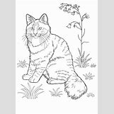 Flower Garden Coloring Pages For Kids   645 x 900 jpeg 86kB