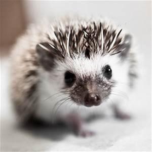 Hedgehogs! | 2048
