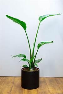 Indoor, Plants, And, Pots