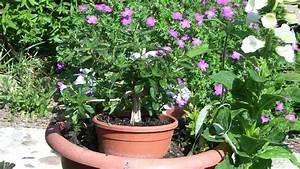 Tulpenzwiebeln Im Topf Pflanzen : video blumentopf richtig bepflanzen ~ Lizthompson.info Haus und Dekorationen