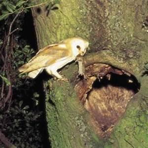 Barn Owl Habitat | www.pixshark.com - Images Galleries ...