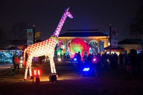 brookfield zoo lights 2017 brookfield zoo in chicago has over 1 million holiday lights